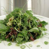 Grønn salat -