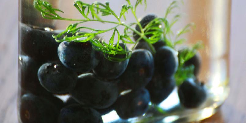 Blåbærdram - Noen blåbær og litt dill setter fin smak på spriten.