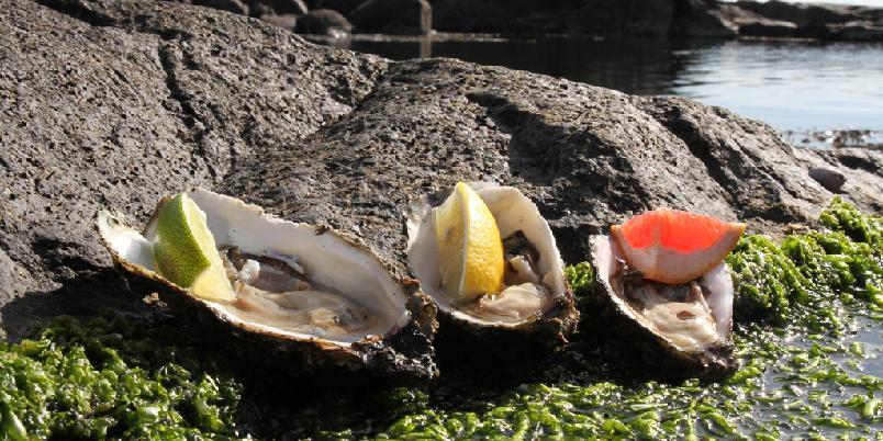 Østers med sitrus - Sitrus er klassisk tilbehør til østers.